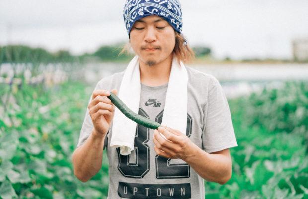 三浦の農家さん直伝!三浦野菜の旬とおいしい見分け方|夏野菜・パリッとはじける自根きゅうり編