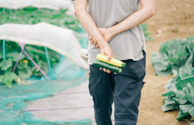 三浦の農家さん直伝!三浦野菜の旬とおいしい見分け方|でっかいけど水々しいズッキーニ編