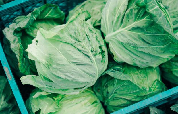 三浦の農家さん直伝!三浦野菜の旬とおいしい見分け方|甘くて柔らかい春キャベツ編